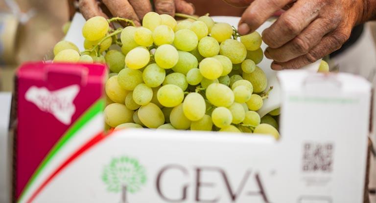 Servizi azienda agricola geva - Red globe uva da tavola ...